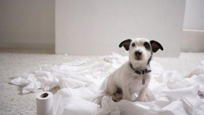 Köpeklerde Tuvalet Eğitiminde Püf Noktalar
