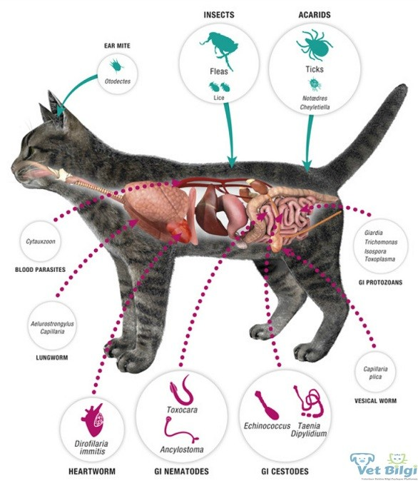 Most Common Parasites Found In Dogs And Cats
