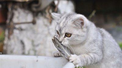 Kedilerde Tüy Dökülmesinin Nedenleri ve Tedavisi