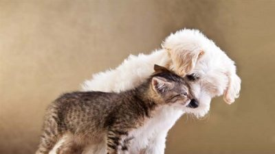 Kedi ve Köpeklerde İshal Nedenleri