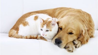 Kedi ve Köpeklerde Kusma Nedenleri