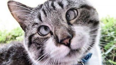Kedilerde Şaşılık Nedenleri ve Tedavisi