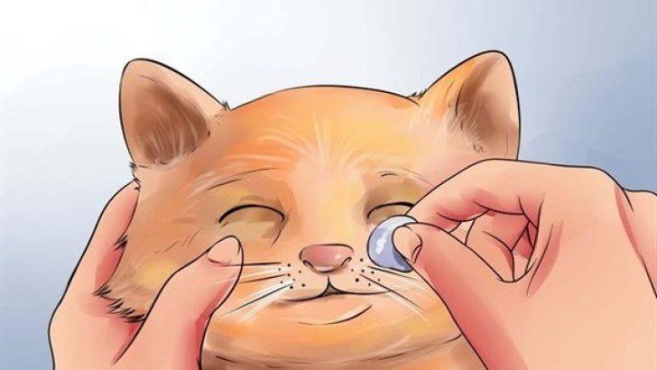 Kedilerde Göz ve Kulak Temizliği
