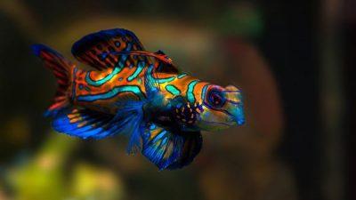 Deniz Akvaryumu Balıkları