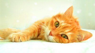Kedilerde Aspirin Kullanımı ve Zehirlenmesi