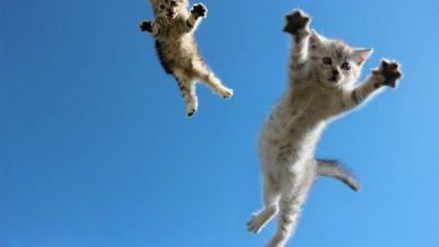 Kedilerde Yüksekten Düşme