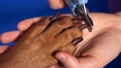 Köpeklerde Tırnak Bakımı ve Kesimi