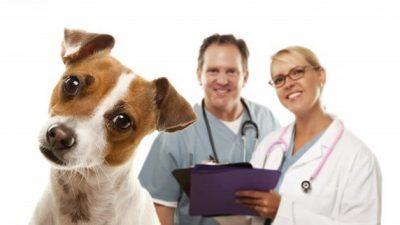 2016 Köpek Aşı ve Parazit Mücadelesi Fiyatları