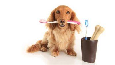 Köpeklerde Ağız ve Diş Bakımı