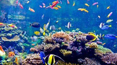 Deniz Akvaryumu Sump Sistemi