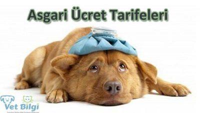 Köpek ve Kedi Kısırlaştırma Ücretleri