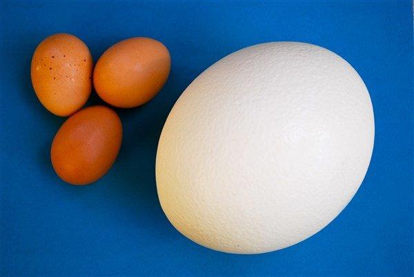 Deve Kuşu Yumurtası
