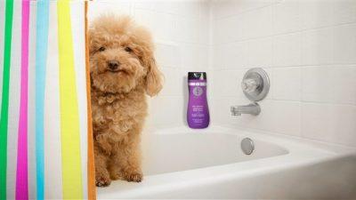 Köpeklerde Temizlik ve Banyo