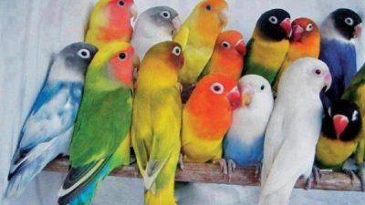 Renklerine Göre Papağan Türleri