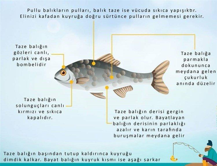Balık Tazeliği