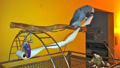 Papağan Bakımı ve Eğitiminde Püf Noktalar