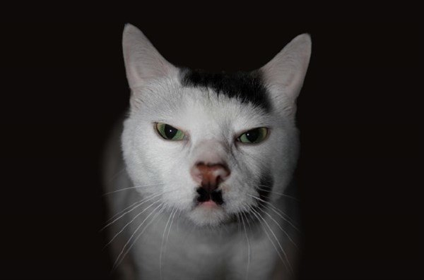 Adolf Hitler Kedi
