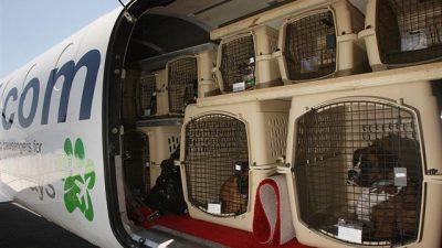 Yurtdışı Evcil Hayvan Taşıma (Gerekli Belgeler)