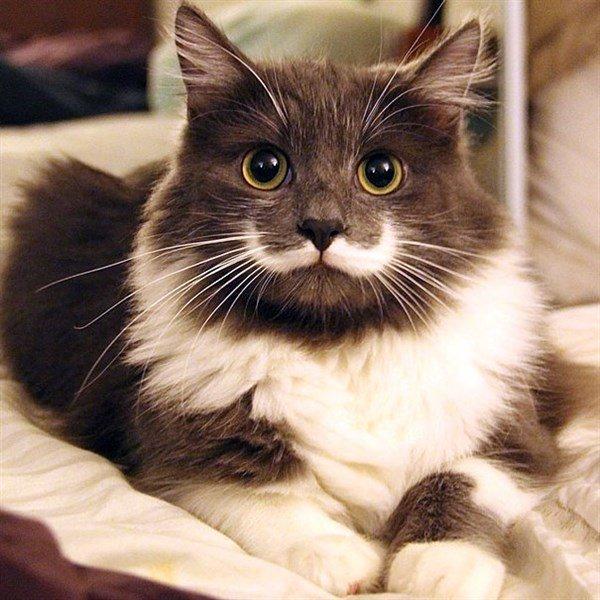 Tarz Kedi