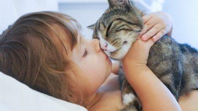 Kedilerde Mırlama Hakkında