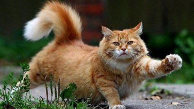 İlginç Kedi Hareketleri ve Davranışları