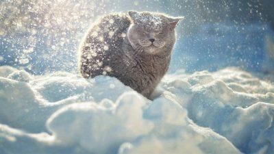 Kışın Kediler ve Kar