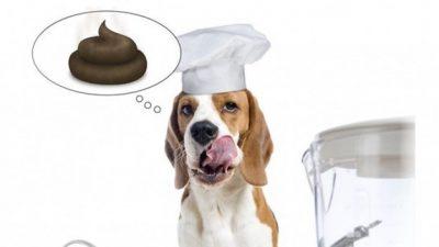 Köpeklerde Dışkı Yeme Problemi