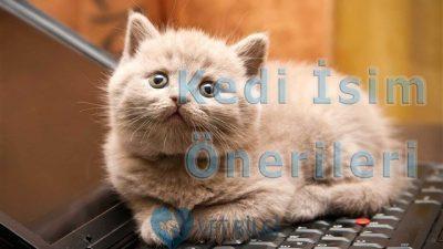 Erkek Kedi İsim Önerileri