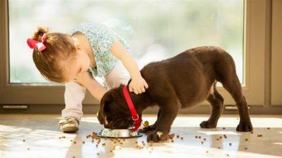 Yavru Köpeklerde Beslenme İlkeleri
