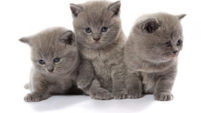 Kedime Hangi İsmi Vermeliyim? Kedi İsim Önerileri