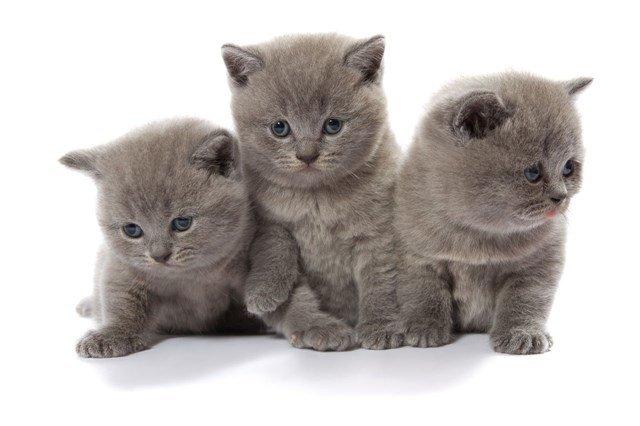 Kedime Hangi Ismi Vermeliyim Kedi Isim Onerileri Vetbilgi