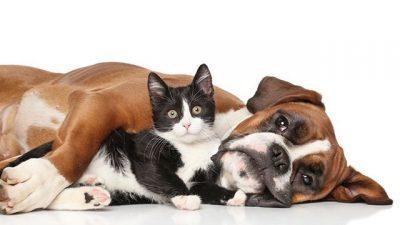 Kedi ve Köpeklerde Akut Böbrek Yetmezliği