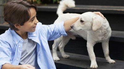 Köpeklerde İç Parazit Belirtileri ve Tedavisi
