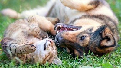 Kedi ve Köpeklerde Kene ve Çözüm Yolları