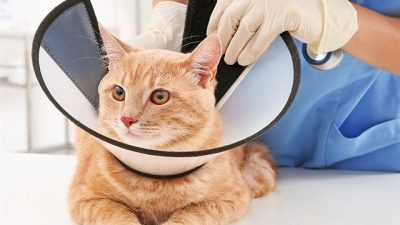 Kedi ve Köpeklerde Kısırlaştırma Faydaları ve Zararları