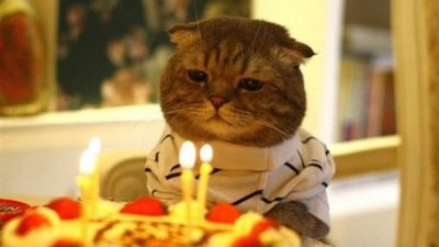 Kediler Ortalama Kaç Yıl Yaşar?