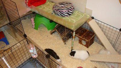 Guinea Pig Kafes Taban Malzemesi Seçenekleri