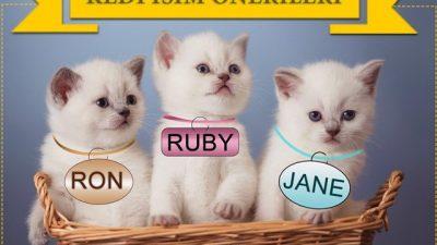 Erkek ve Dişi Kedi İsimleri ve İsim Önerileri