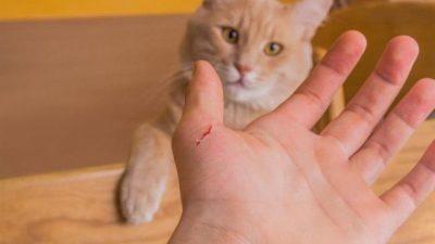 Kedi Tırmalaması ve Isırmasında İlk Yardım