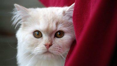 Kedilerde Tüy Dökülmesi Nedenleri ve Tedavisi