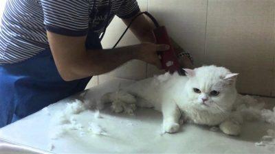 Kedi-Köpek Tıraş ve Banyo Fiyatları