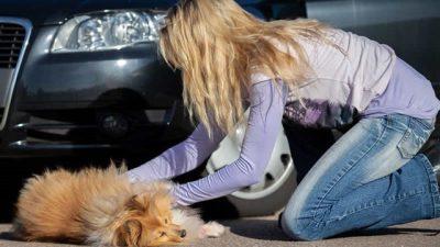 Kedi ve Köpeklerde Trafik Kazası Sonrası İlk Yardım