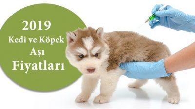 2019 Kedi-Köpek Aşı ve Parazit Uygulaması Fiyatları
