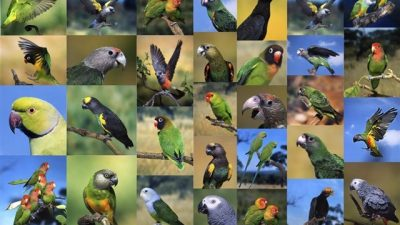 Papağan Türleri Özellikleri ve Fiyatları