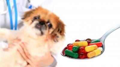 Kedi ve Köpeklerde Antibiyotik Kullanımı