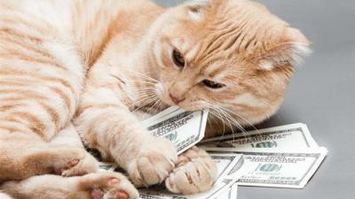 Bir Kedinin Aylık ve Yıllık Masrafı Ne Kadar Tutar?