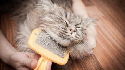 Kedim Neden Tüy Döküyor? Çözüm Önerileri!