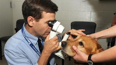 Fluorescein Göz Testi ve Schirmer Gözyaşı Testi